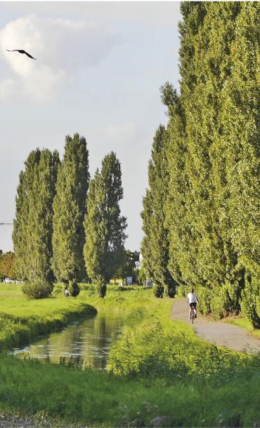 Landschaft mit Radweg und Bäumen am Fluss