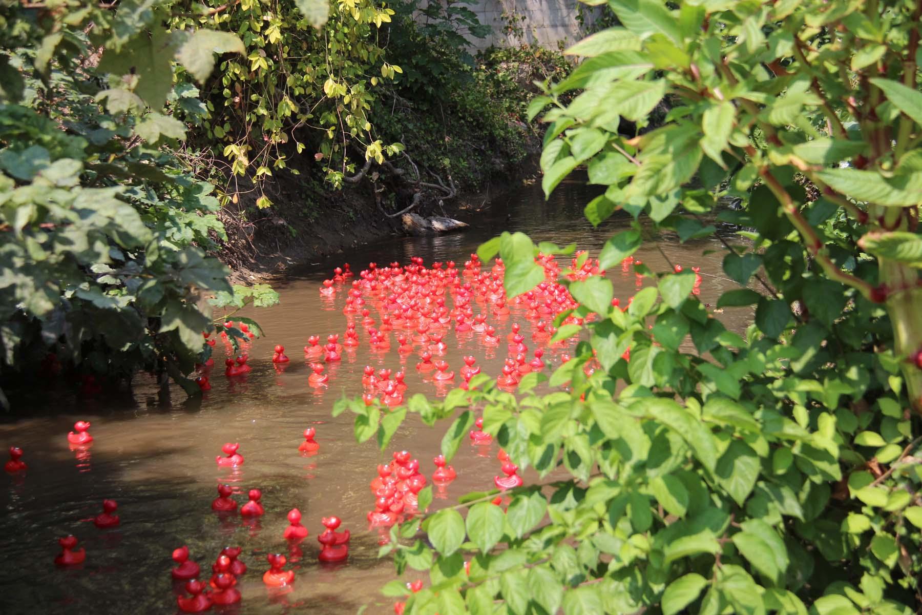 Rote Renn-Enten im Wasser beim Entenrennen im Rahmen des 1. Bad Schönborner Familienfestivals am 15. Juli 2018