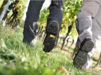 Nahaufnahme der Beine zweier Wanderer im grünen Gras vor Weinreben