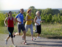 Läufer in den Weinbergen um Bad Schönborn