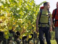 Zwei Wanderer in den Weinbergen rund um Bad Schönborn