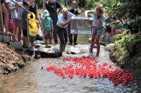 Start des Entenrennens bei der Eröffnung des Wasserspielplatz im Sole-Aktiv-Park Bad Schönborn am 15. Juli 2018