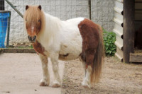 Pony im Kleintierpark Bad Schönborn