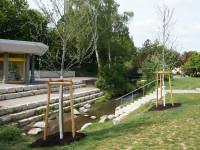 Neupflanzung von Bäumen im Kurpark