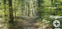 Wald mit Weg in der Mitte