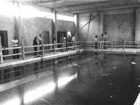 Baustelle der Kleinschwimmhalle in Langenbrücken