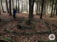 Wald Baum Bodenkreis