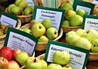 Körbchen mit alten Apfelsorten