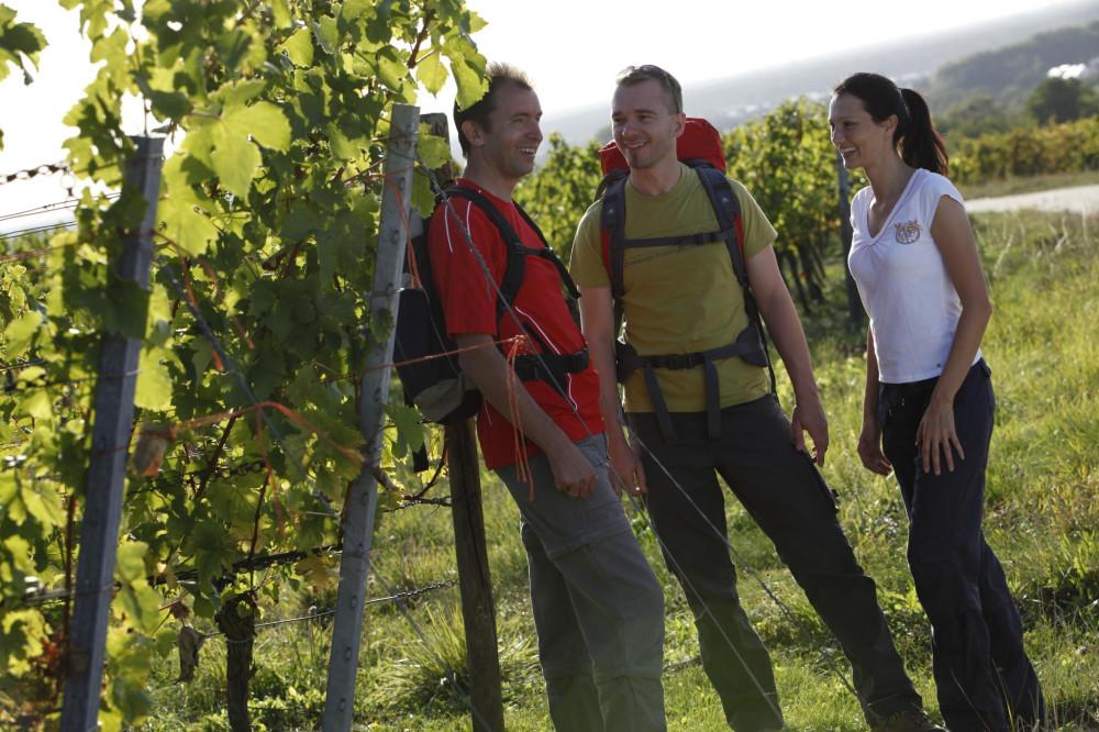 Drei Wanderer auf dem Domblickweg in Bad Schönborn Langenbrücken