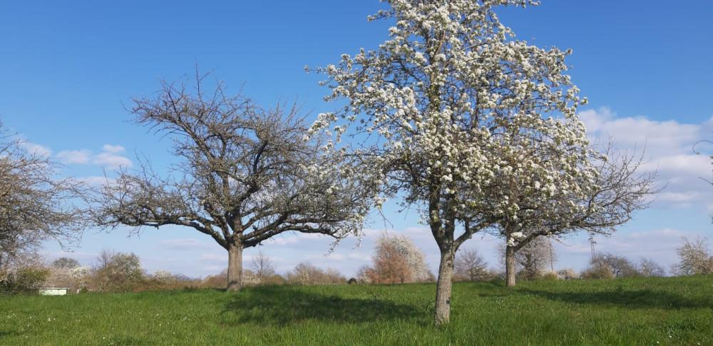 Blühende Bäume im Frühjahr